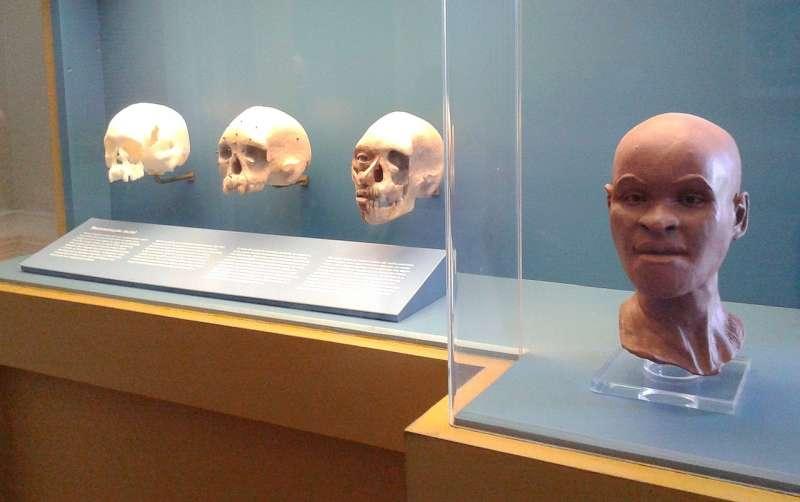 科學家從一塊頭骨還原露西亞的頭顱,並模擬她的長相。(取自Wikipedia)