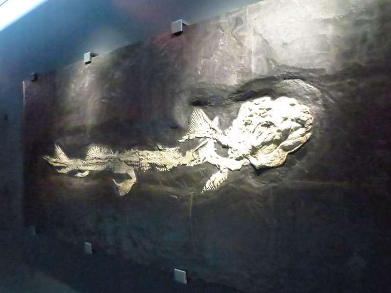古代海洋生物標本。(圖/時報出版提供)