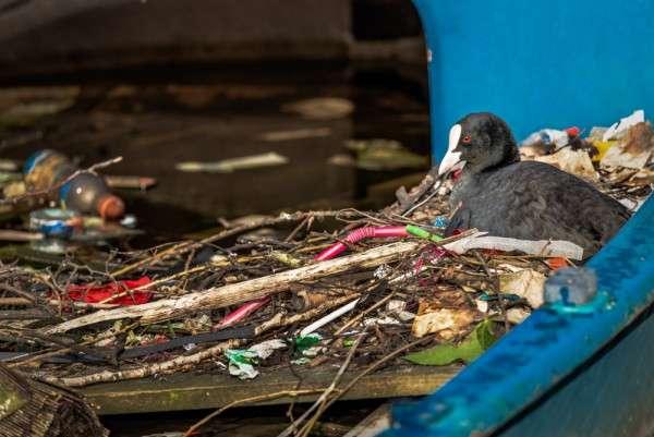 塑料垃圾對生態環境構成極大影響。(圖/*CUP提供)