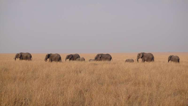 大象,帶著幾個月大的小象,魚慣前行,步履緩和,龐然巨獸,近在咫尺,是這樣震撼人心。(圖/謝幸吟提供)