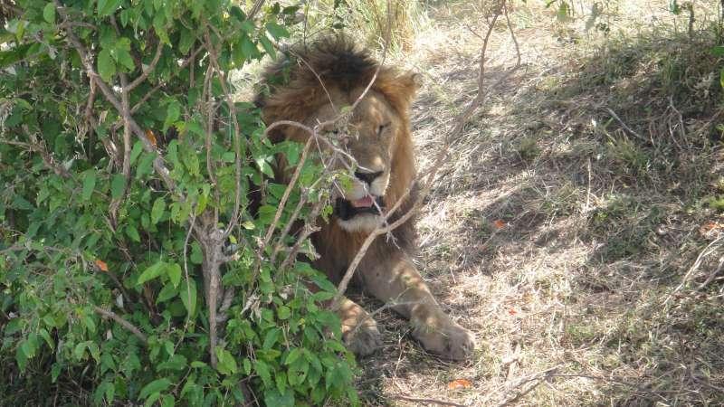 非洲五霸(Big 5):大象、豹、犀牛、獅子、水牛。(圖/謝幸吟提供)