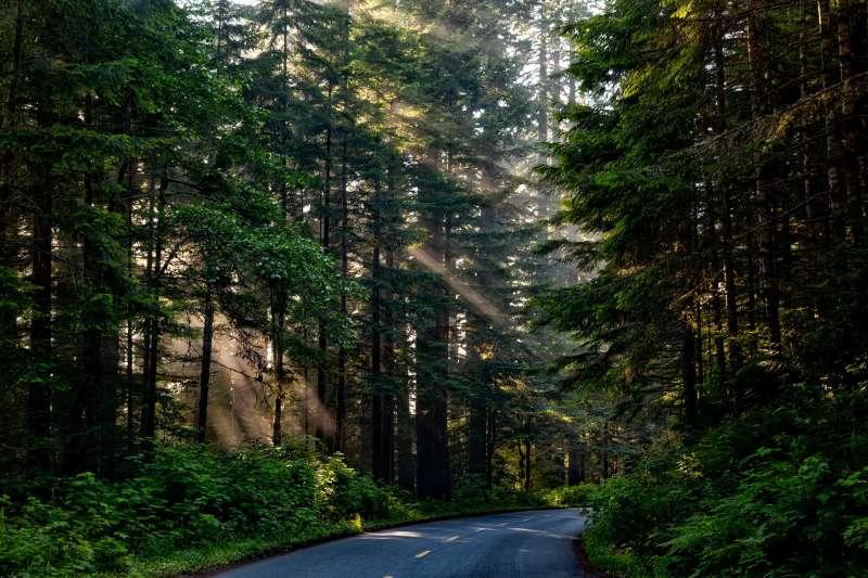 樹蔭可降低地表溫度(取自Pixabay)
