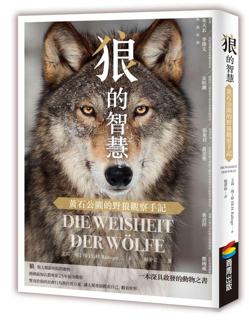 《狼的智慧》立體書封(商周出版提供)