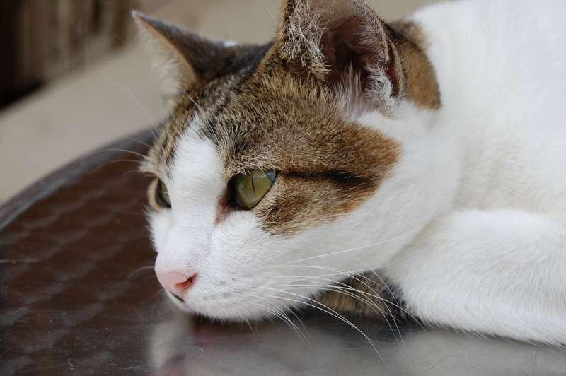 2019-09-28-貓咪示意圖。(圖/Zhao !@flickr)