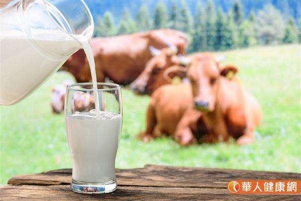 牛乳含有珍貴的「共軛亞麻油酸(CLA)」,是屬於不飽和脂肪酸的一種,具有促進脂肪代謝的作用。(圖/華人健康網提供)