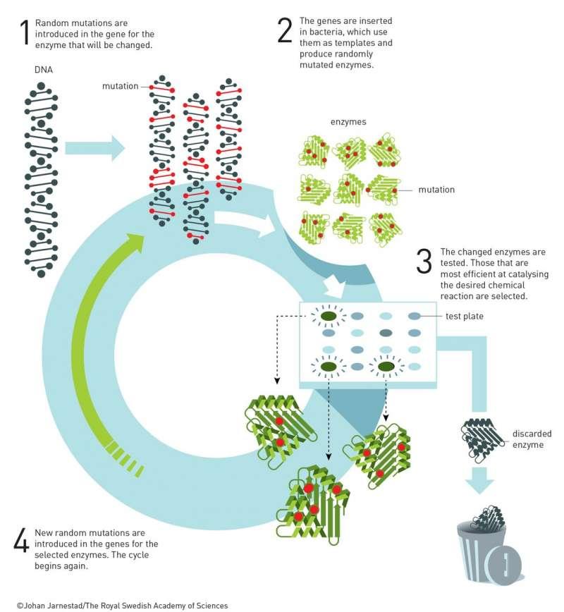 2018年諾貝爾化學獎得主阿諾德的「酵素定向演化」技術(諾貝爾獎委員會)