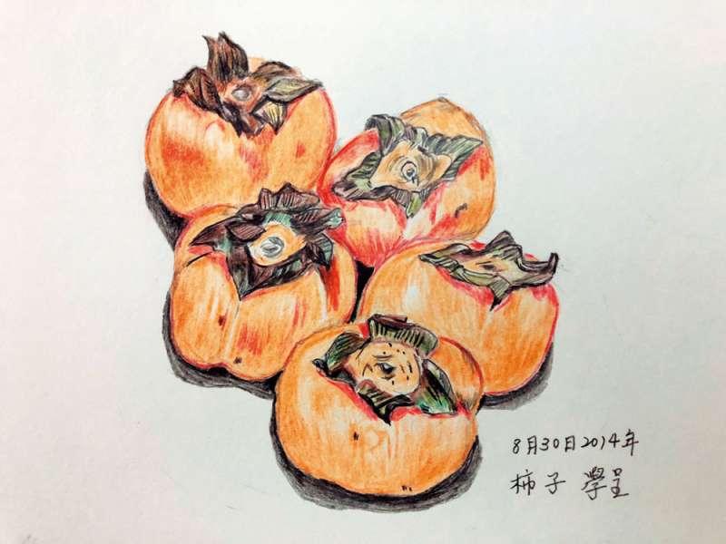 新竹縣的柿子當紅,成為觀光重點。(王學呈繪圖)