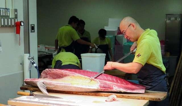 正式開幕的豐洲市場水產中盤賣場棟內,正在進行鮪魚的解體作業(圖/潮日本)