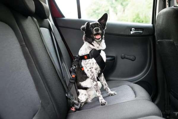 「狗狗模式(Dog mode)」開啟後可以維持車內溫度,並播放讓狗狗情緒穩定的音樂,同時駕駛座的螢幕上會顯示車內溫度。(圖/數位時代提供)