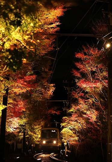 據說過去還是矮木時被稱為「紅葉行道樹」,長成高大樹木後則改稱為「紅葉隧道」。(圖/潮日本)