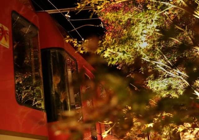 從車窗內眺望「紅葉隧道」的女性。(圖/潮日本)