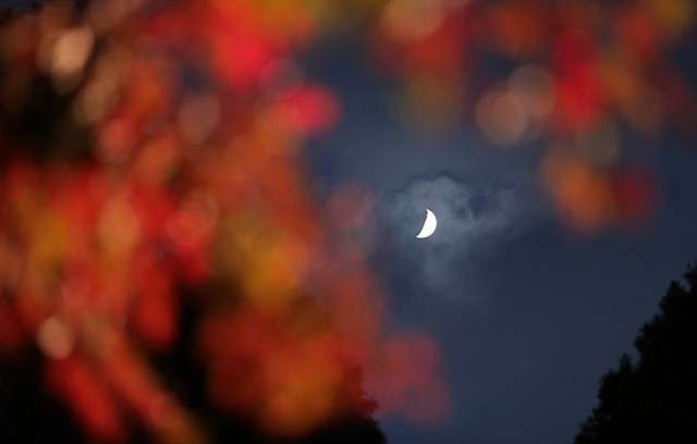 隔著紅葉欣賞月亮。(圖/潮日本)