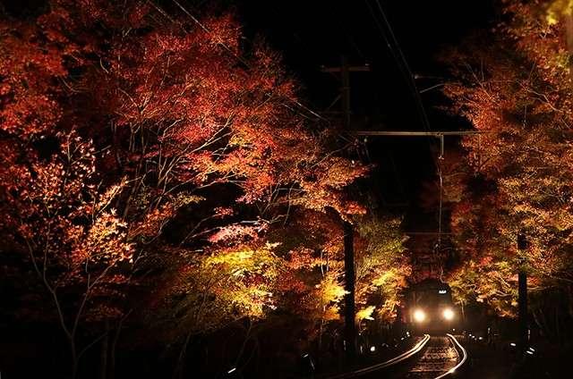 「紅葉列車」穿越「紅葉隧道」前進。(圖/潮日本)