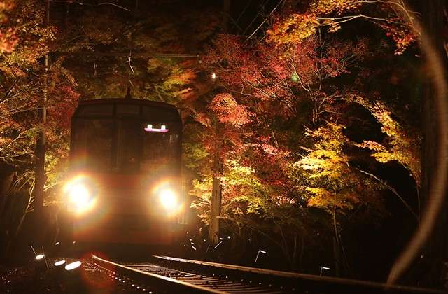 「紅葉列車」於「紅葉隧道」中以緩慢運行的方式前進。(圖/潮日本)