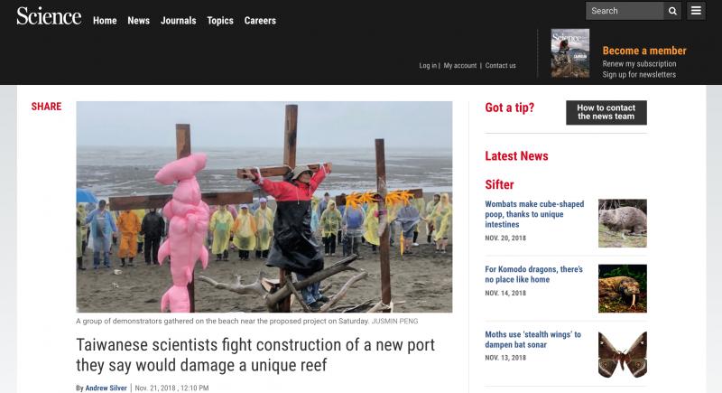 20181123-環團日前在大潭藻礁發起「牽手護藻礁」活動,獲得國際期刊《Science》「網站」主動報導。(擷取自《Science》網站)