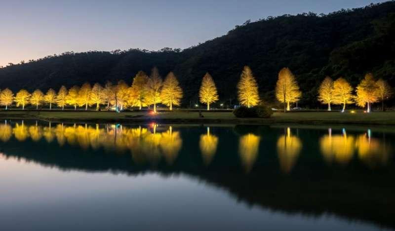 宜蘭明池國家森林遊樂區的落羽松。(圖/HotelsComebined提供)