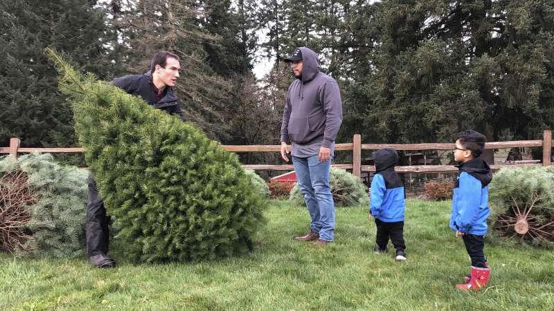 美國98%的耶誕樹產自農場(美聯社)