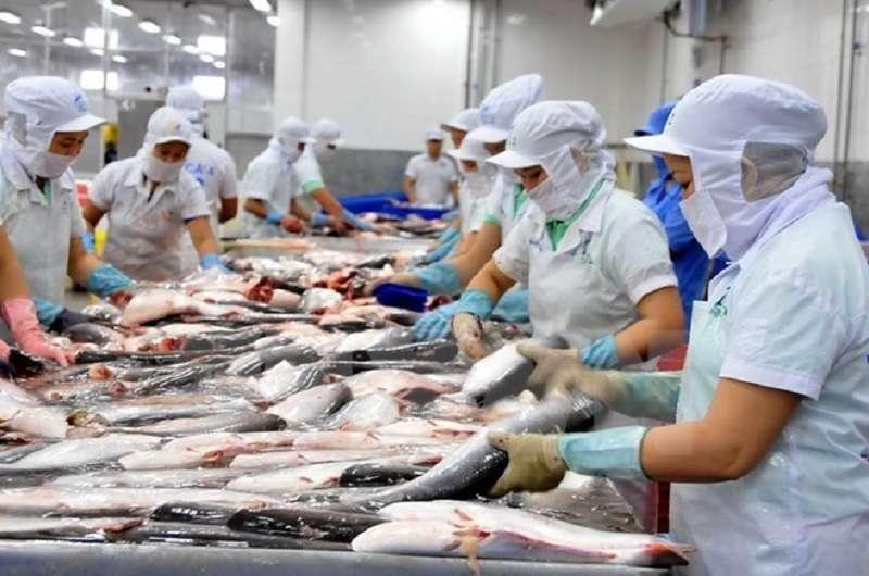 美國商務部先規定對自越南進口的巴沙魚採取100%檢測,平均每櫃貨物要多支付7000美元的單次檢測費用。(越南台商網)