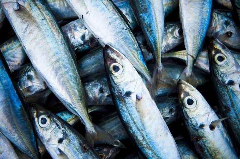魚(圖/unsplash)https://unsplash.com/photos/D-AuXgIrqvk