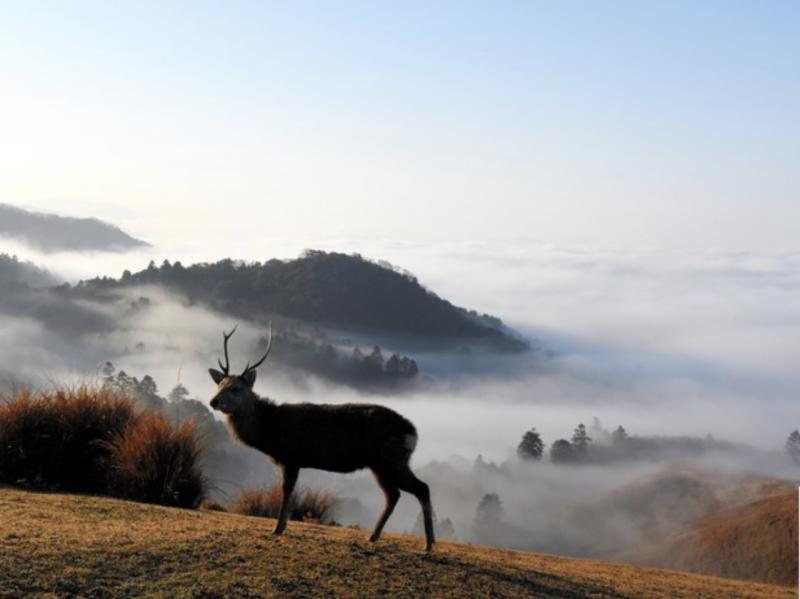 20181227-若草山的鹿以及被雲海覆蓋的奈良盆地(右方)=攝於12月21日。(圖/潮日本提供)