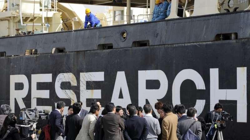 日本每年捕撈數百隻鯨魚。(圖/BBC中文網)