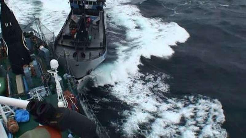 反捕鯨團體的船隻2013年直接碰撞日本科研捕鯨船「第三勇新丸」。(日本水產廳)