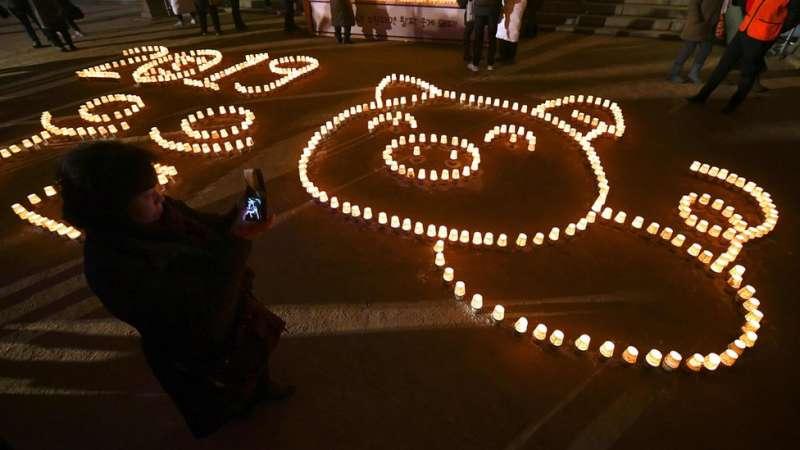 韓國首爾曹溪寺,佛教徒將蠟燭擺成豬的圖案,慶祝豬年到來。(圖/BBC中文網)