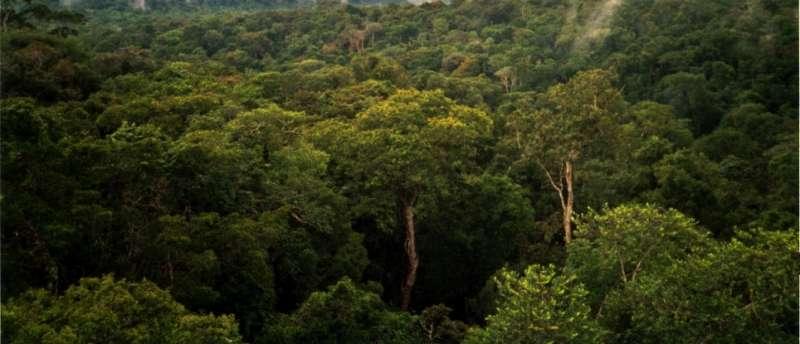 巴西亞馬遜雨林(Phil P Harris@Wikipedia / CC BY-SA 2.5)