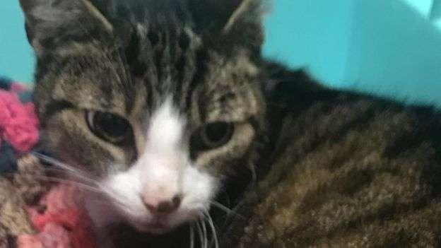 羅克西據信健康情況良好,但仍然有待1月2日獸醫全面檢查。(BBC中文網)