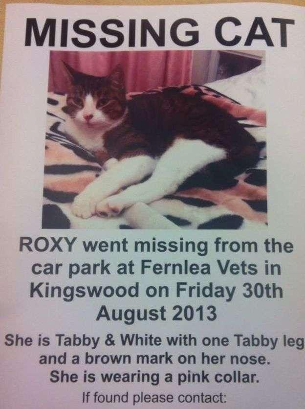 斯托克斯找遍了大街小巷,還張貼海報尋貓,但都徒勞無功。(BBC中文網)