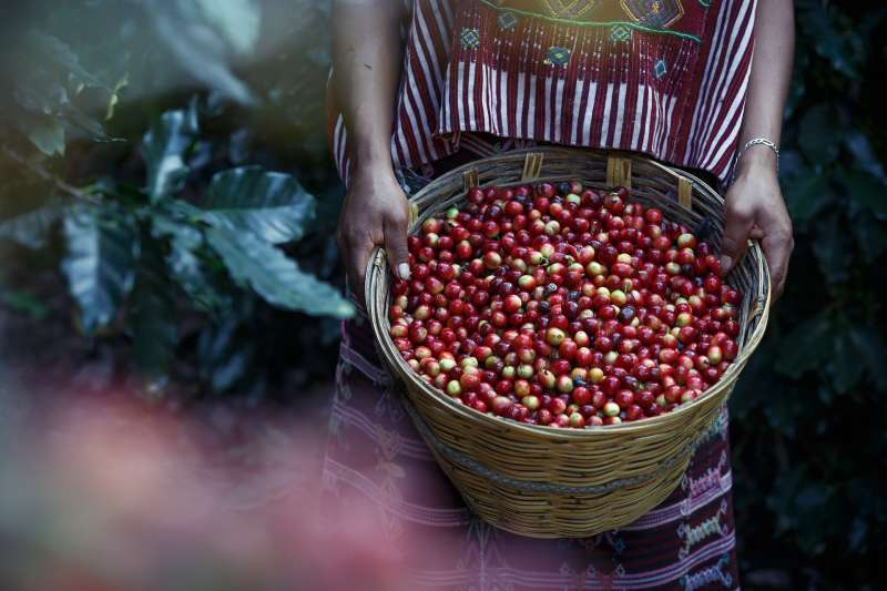 全球氣候變遷加劇,咖啡豆產量將受到嚴重衝擊(取自Pixabay)