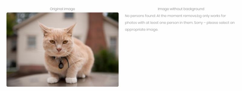 但是可惜的是,目前刪除僅支持識別人像,換句話說像貓貓狗狗,花花草草的圖片這個網站是無法幫你去背的。(圖/愛范兒ifanr)