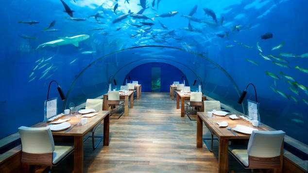 位於海底的餐廳,讓你邊吃飯邊享受悠遊魚兒的曼妙。(圖/瘋設計)