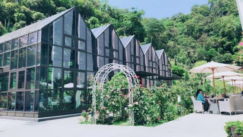 苗栗雅聞七里香玫瑰森林,有浪滿感十足的玫瑰花相伴遊客(圖/七里香玫瑰森林臉書)