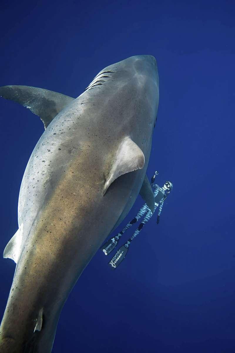 拉姆齊和夥伴平日也會帶遊客進行無柵欄的鯊魚生態導覽。(美聯社)