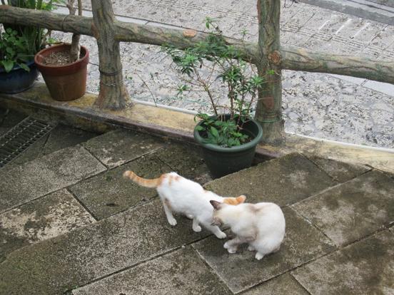 壺屋通玩耍的貓。(圖/秋禾攝影)