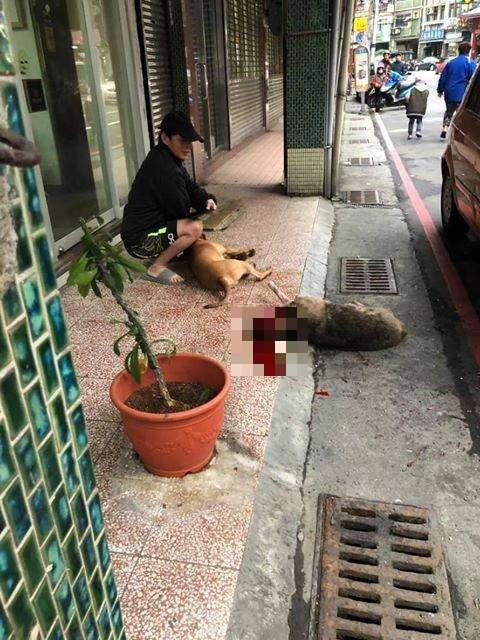 2019-01-24-網友爆在基隆有隻比特犬攻擊路邊流浪狗,且並非第一次發生。(取自基隆人踹共粉絲專頁)
