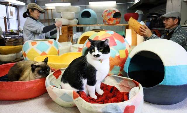 20190131-貓咪看似愜意地生活在和紙製成的「貓屋」、「貓床舖」=攝於1月18日。(圖/潮日本提供)