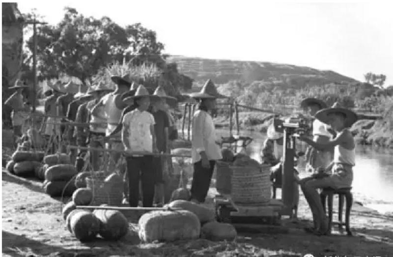 廣東潮安縣楓溪公社基層供銷合作社人員在收購冬瓜,協助當地農民打開銷路。(攝於1962年,新華社)