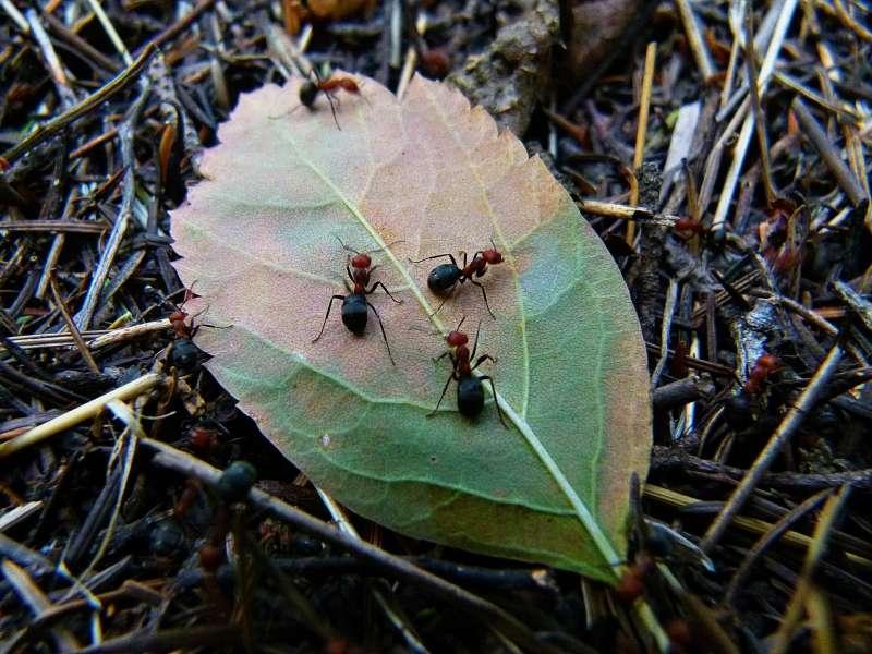 一份最新科學評論指出,全球昆蟲數量銳減。(取自Pixabay)