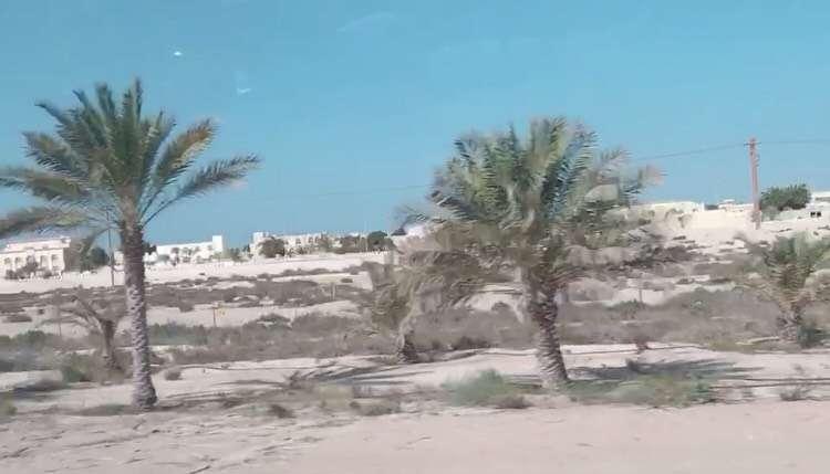路上的小樹皆是以滴灌技術灌溉(圖/李宇涵攝)