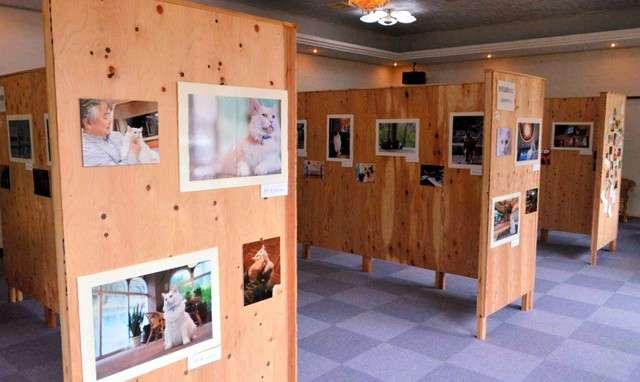 拍攝各旅館招牌店貓的攝影展會場。(圖/潮日本提供)
