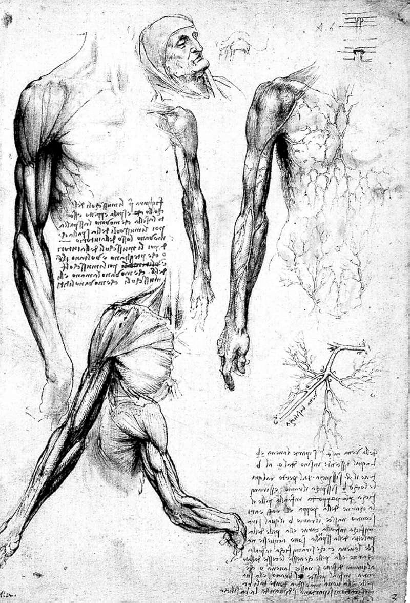 20190304-達文西對於人體構造與肌肉有很專精的研究。(圖/商周提供)