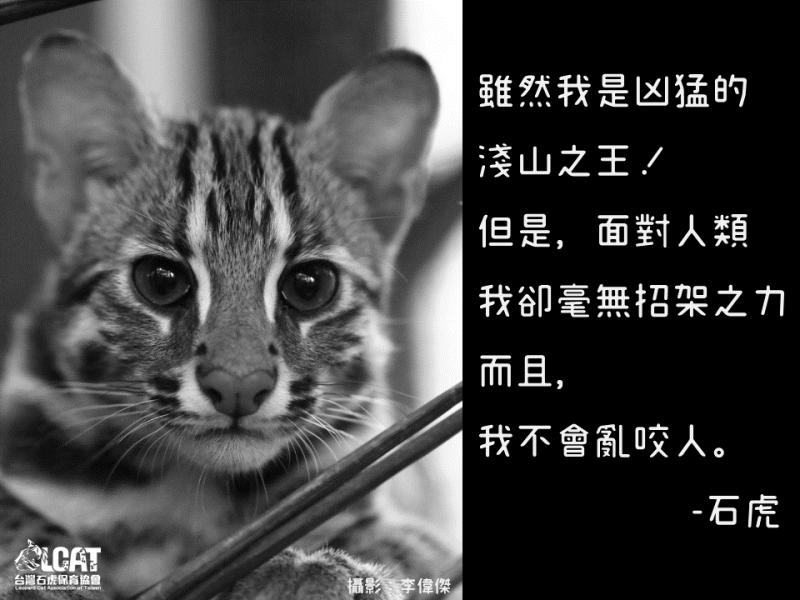 (圖/取自台灣時虎保育協會臉書)