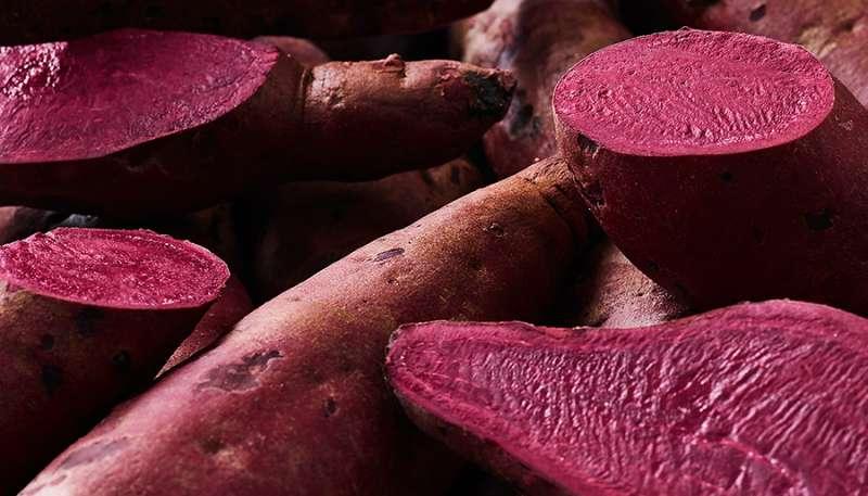 Chr. Hansen是一間全球性的生物技術公司,以非基改的方式培育出Hansen sweet potato™,提供代替胭脂紅色素的新選擇。(圖/取自Chr. Hansen官網)