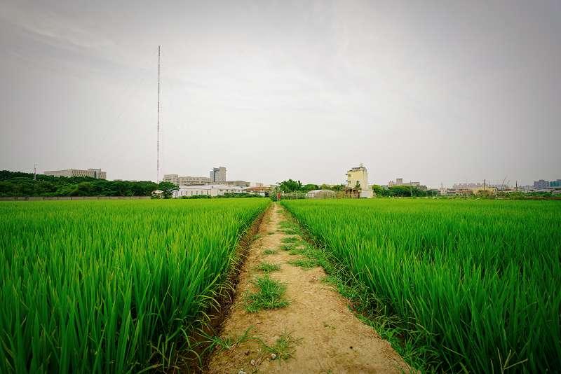 20190401-桃園市茄苳里,農田、農地、農路。示意圖。(取自pang yu liu@flickr/CC BY-SA 2.0)