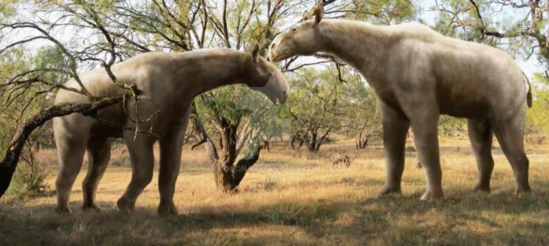 巨犀(圖/翻攝自youtube)