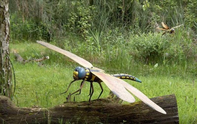 巨脈蜻蜓(圖/翻攝自youtube)
