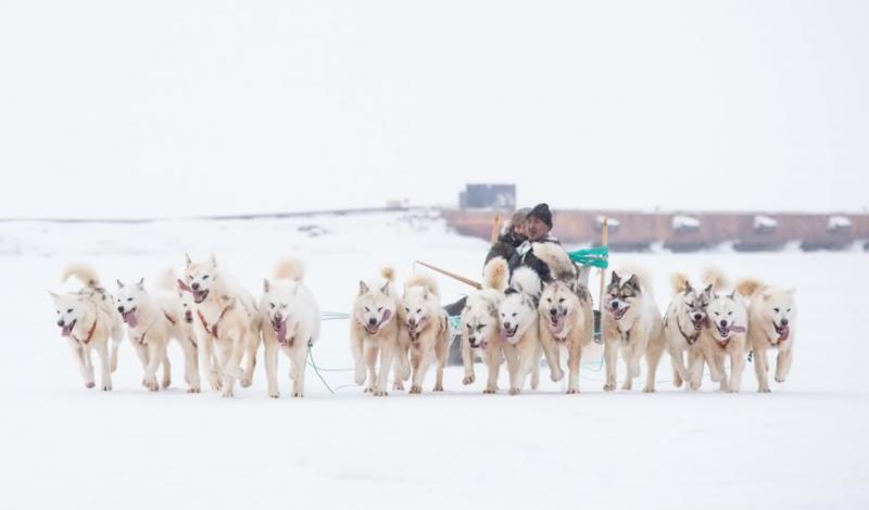 每年有三天的時間,圖勒基地會舉辦雪橇比賽,在結冰的海面上,比賽狗拉雪橇。這時因紐特人就會來到基地,順道帶一些土產來販賣。(圖/研之有物提供)