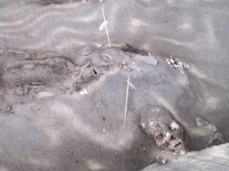 智利北部阿里卡新克羅文化遺址的木乃伊(Zorka Ostojic Espinoza@Wikipedia / CC BY 2.0)